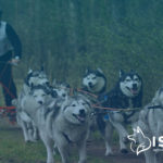 All About Dog Sledding