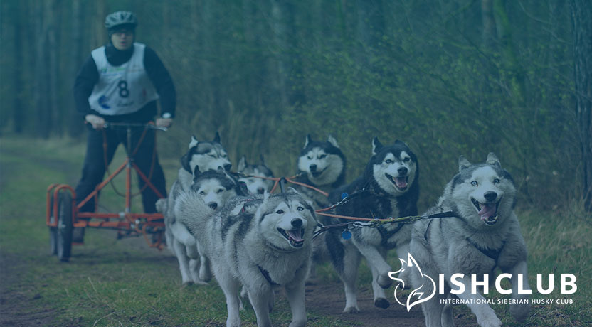 Blog10 - All About Dog Sledding