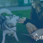 Recreational Activities for Siberian Huskies and Their Humans