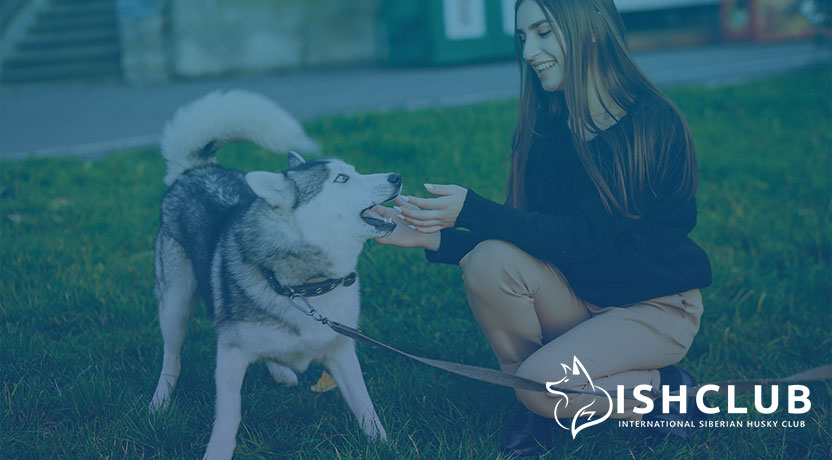Blog8 - Recreational Activities for Siberian Huskies and Their Humans