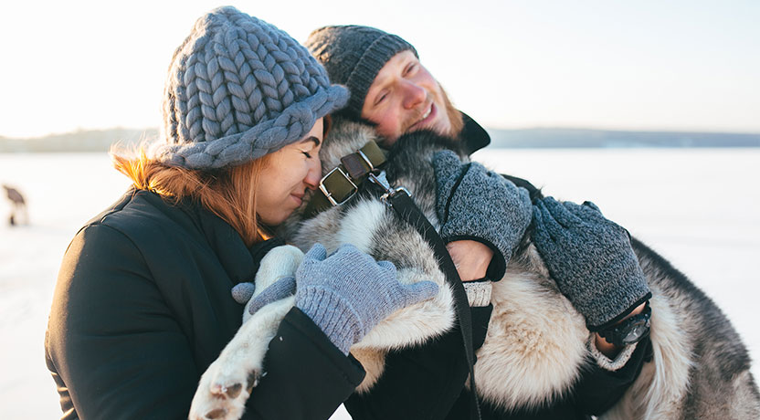 h2 - Tips on Living with a Siberian Husky