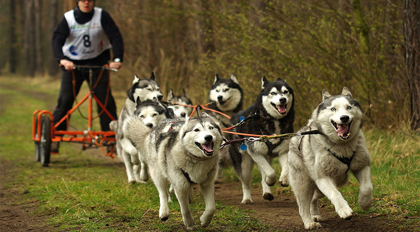 k3 - All About Dog Sledding
