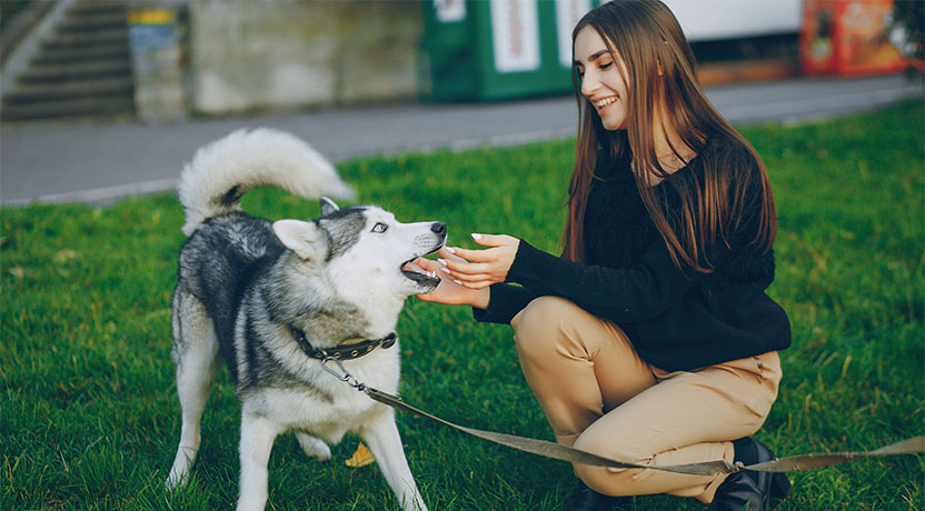 y1 - Recreational Activities for Siberian Huskies and Their Humans